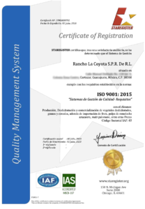 Certificado 9001 Español